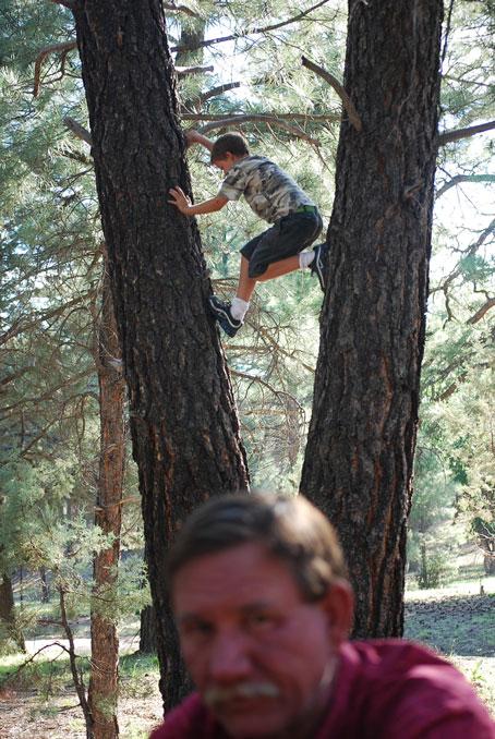 Noah-in-tree